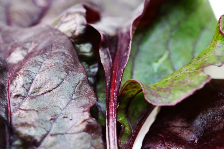 Rote Bete Blätter.JPG