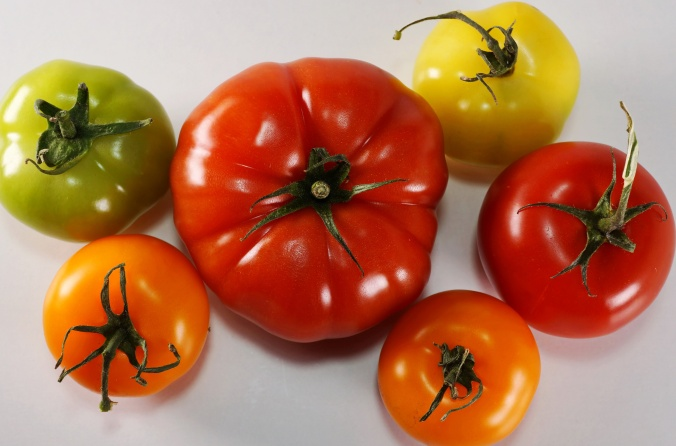 gruene bunte TomatenDSC05915a