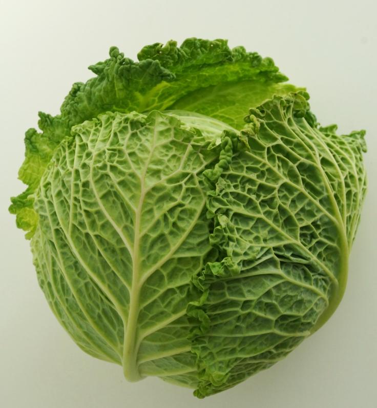Wirsing savoy cabbage DSC06892a.JPG