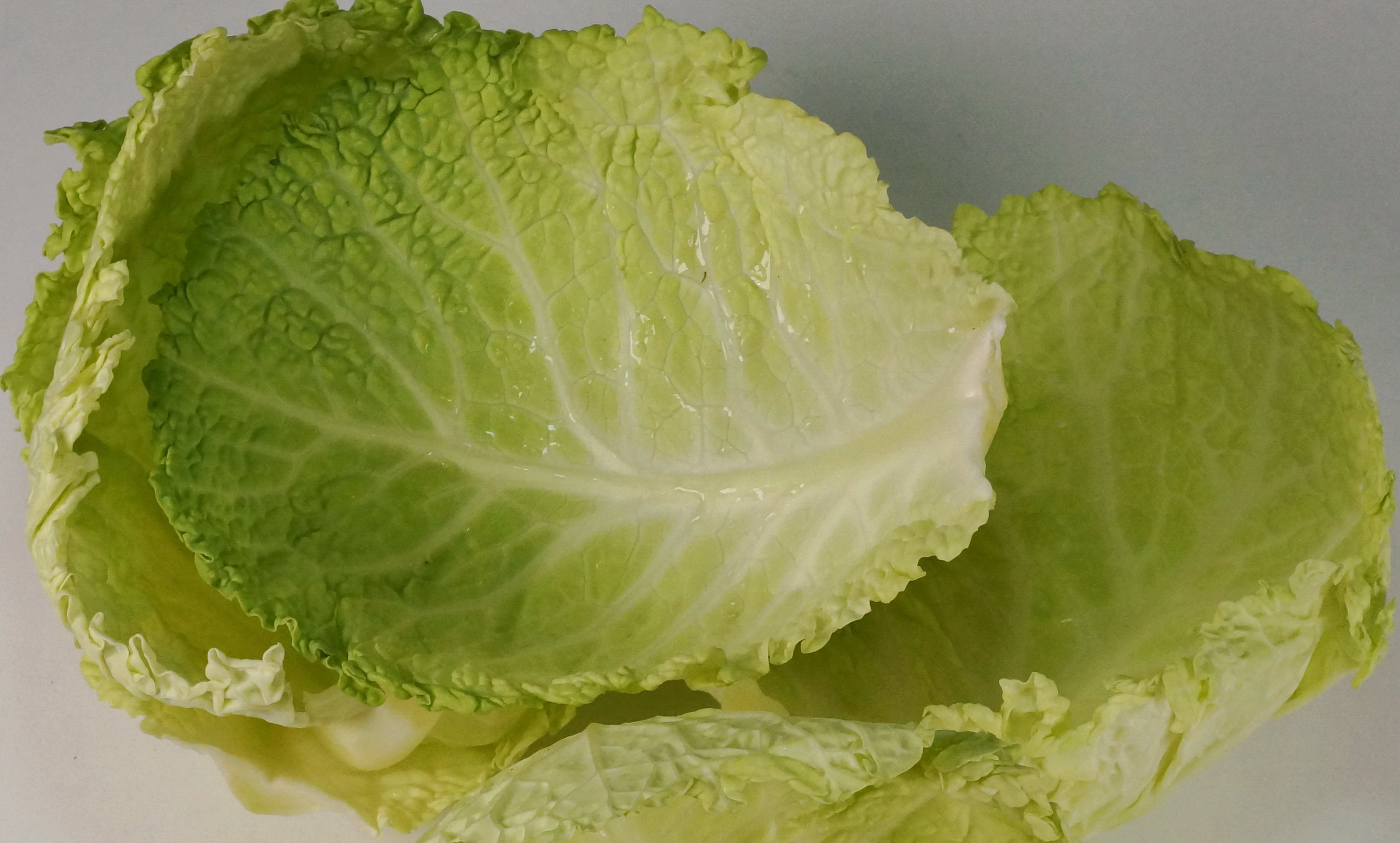 Wirsing Savoy cabbage DSC06962a.JPG