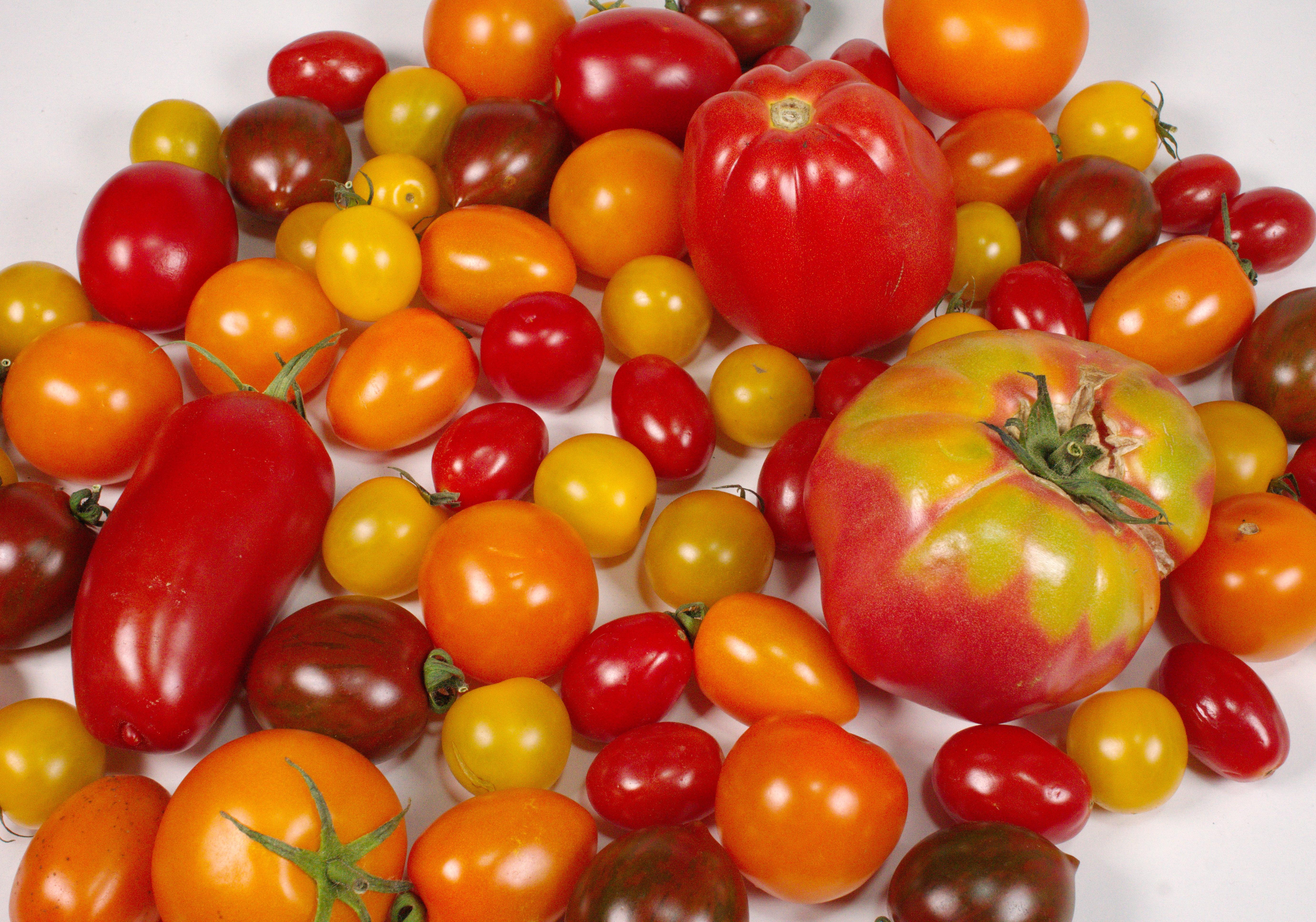 Tomaten Carpaccio coconutcucumber.com DSC06796
